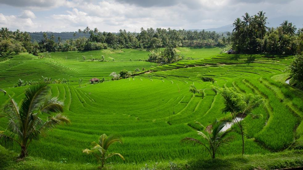 Na Bicykli Na Bali
