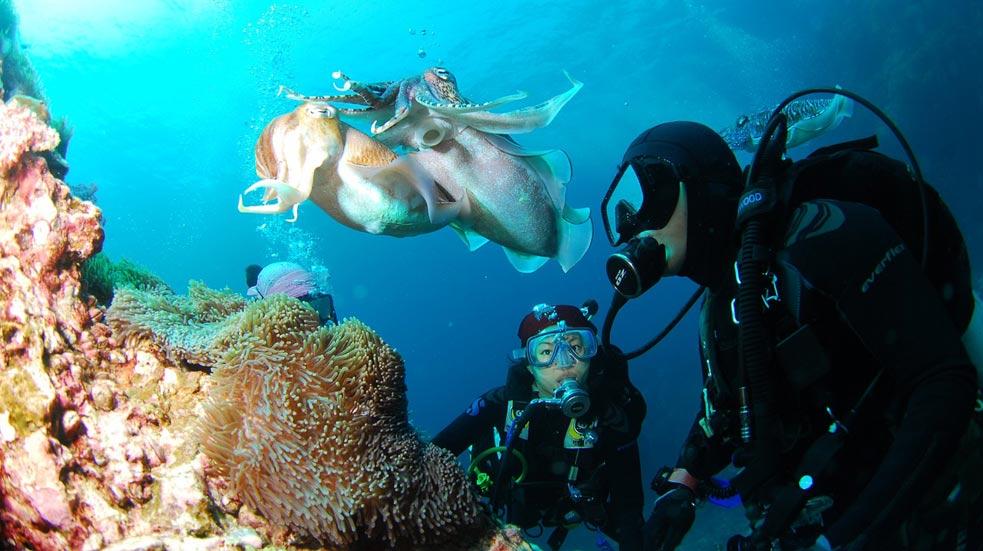 Potápanie Na Bali