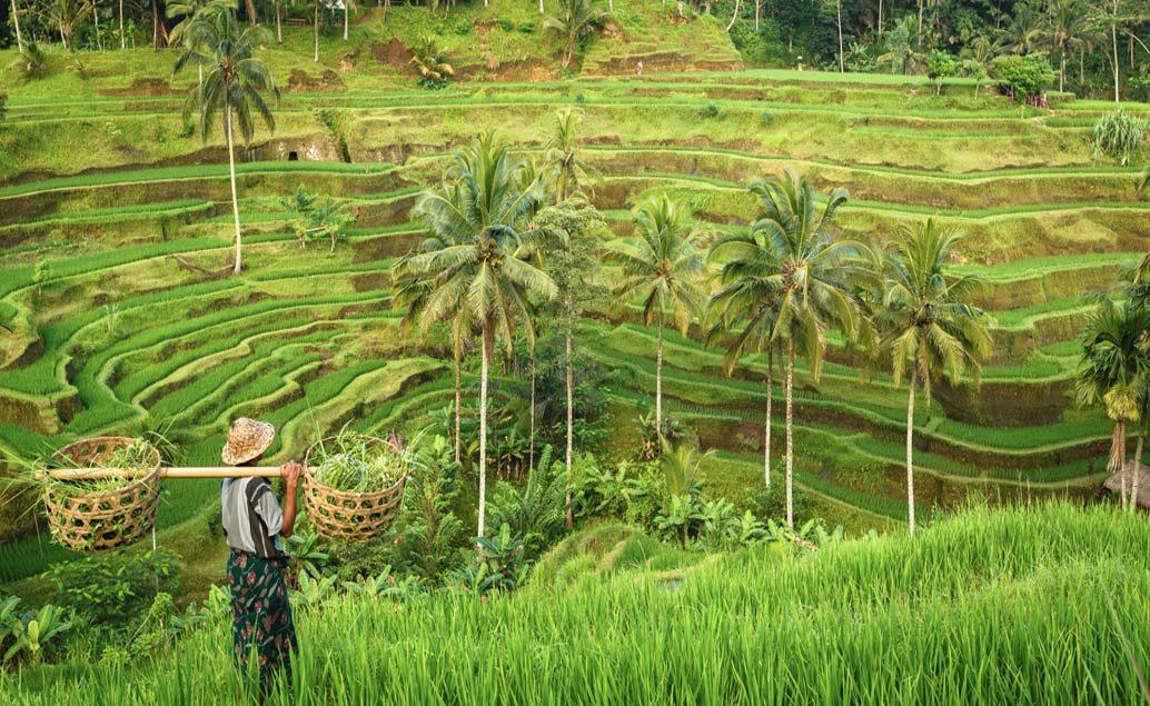 Svadobná cesta na Bali